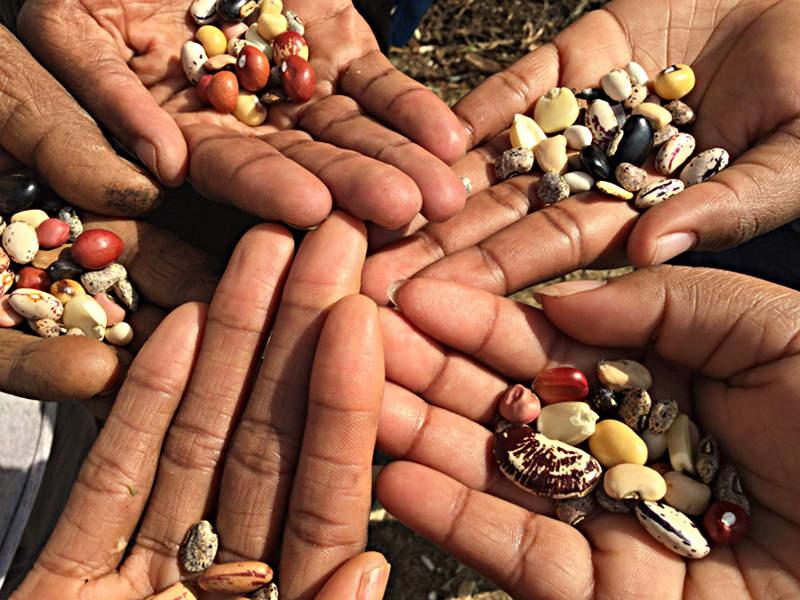 Aankondiging UF035 uitje: Reclaim the seeds