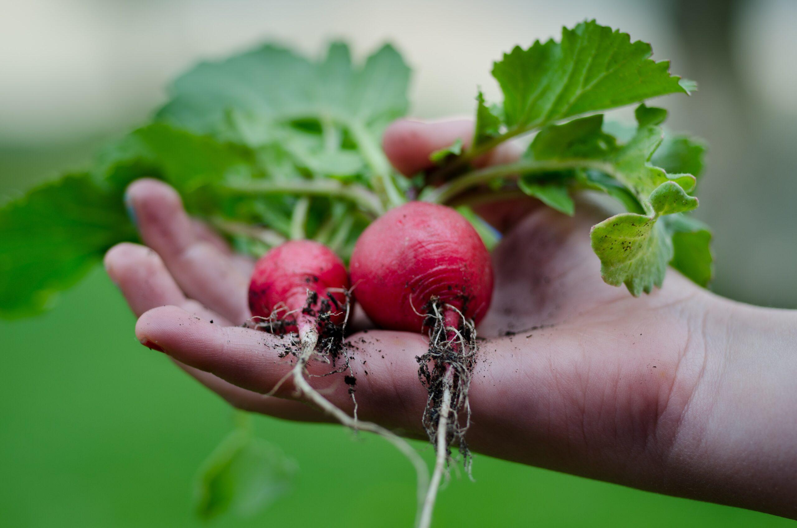 healthy-vegetables-hand-gardening-9301